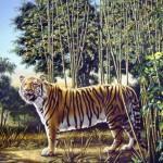 530-hidden-tiger