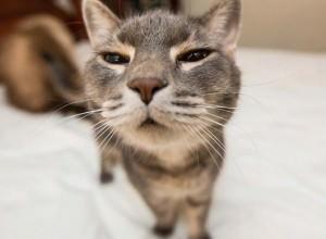 530-funny-cat