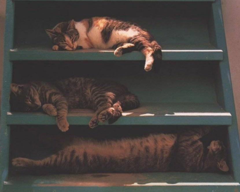 cats in sleep