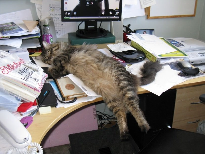 desk cat kitten sleeping
