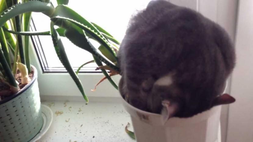 Funny Cat Sleeping Position