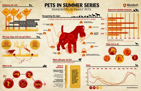 10 signs your dog or cat has been biten snake infographic
