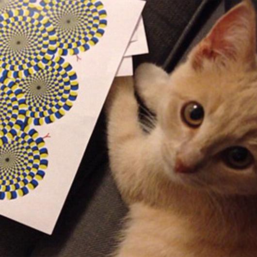 10 Amazing Cat Optical Illusion Pictures Puzzles Photos