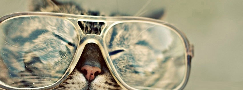 Cat Sunglasses Facebook Covers