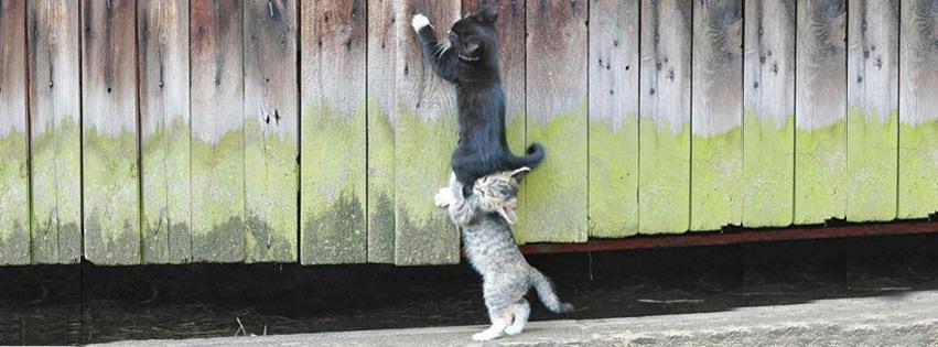 100 cute cat  u0026 kitten cover photo for facebook timeline