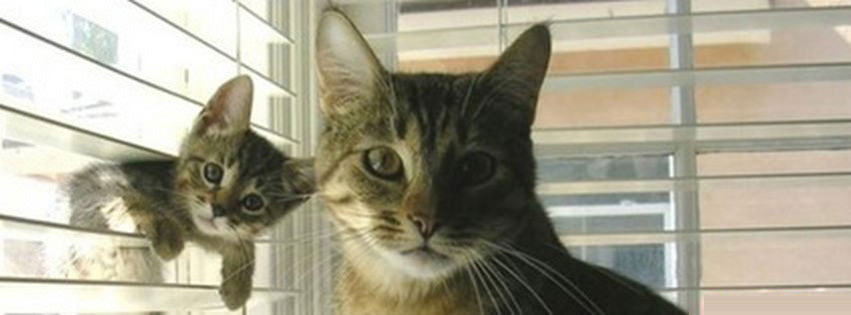 cat with kitten Facebook Profile Timeline Cover