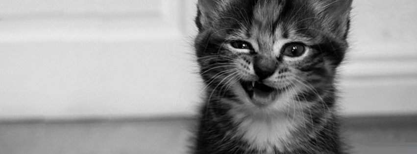 funny cat 3 facebook cover timeline banner for fb