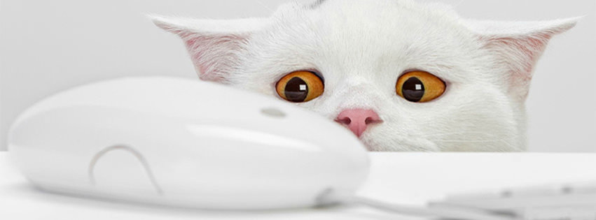 100 cute cat amp kitten cover photo for facebook timeline