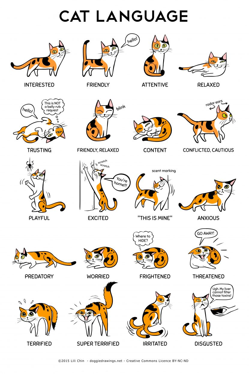 Understanding the Cats Body Language