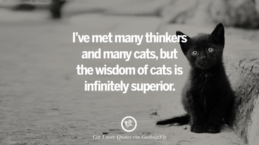 I've met many thinkers and many cats, but the wisdom of cats is infinitely superior. Cute Cat Images With Quotes For Crazy Cat Ladies, Gentlemen And Lovers