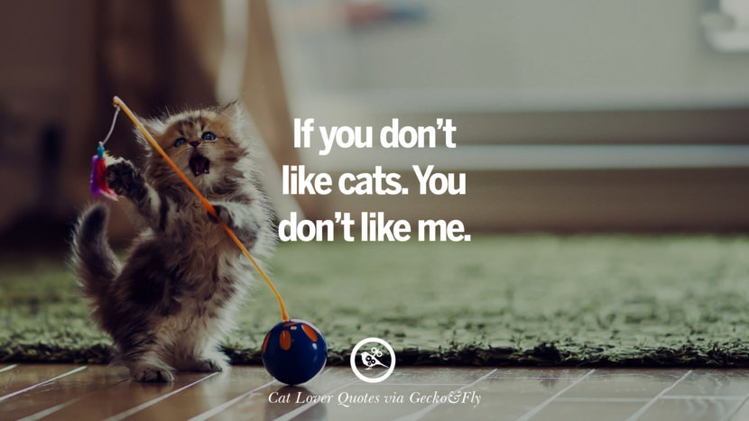 If you don't like cats. You don't like me. Cute Cat Images With Quotes For Crazy Cat Ladies, Gentlemen And Lovers