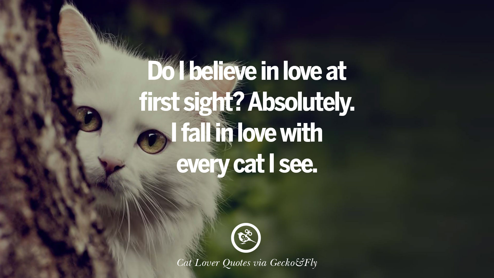 Cat Quotes | 25 Cute Cat Images With Quotes For Crazy Cat Ladies Gentlemen And