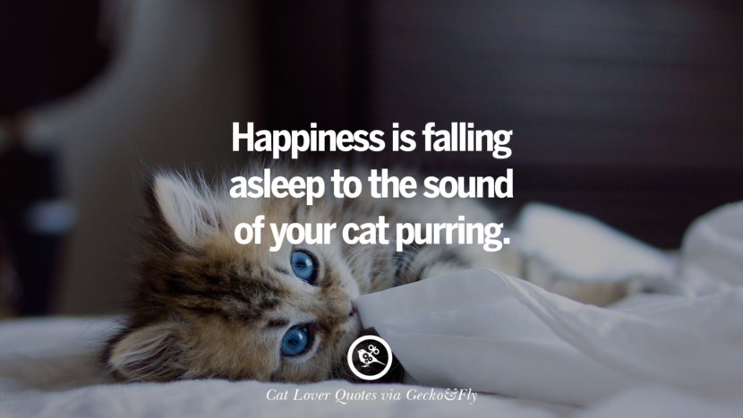 happiness is falling asleep to the sound of your cat purring. Cute Cat Images With Quotes For Crazy Cat Ladies, Gentlemen And Lovers