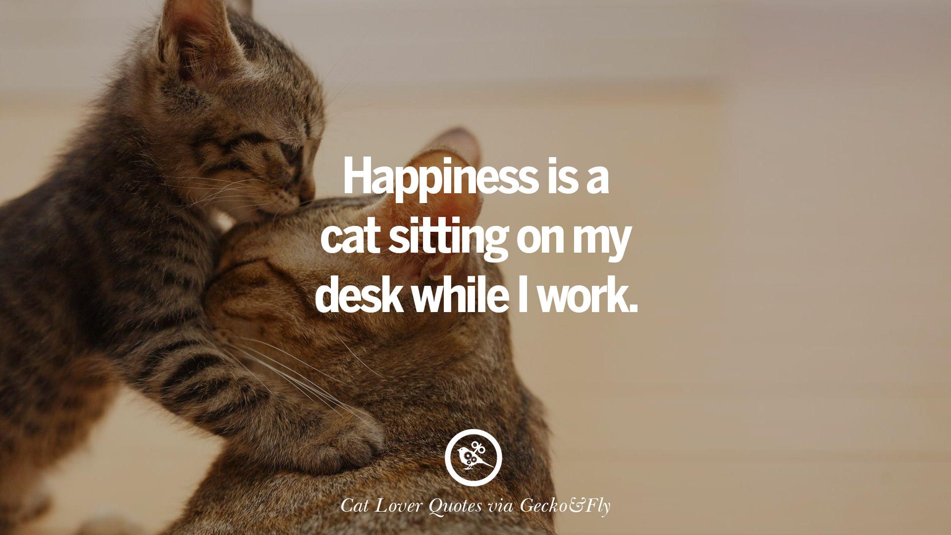 Cat Quotes | 25 Cute Cat Images With Quotes For Crazy Cat Ladies Gentlemen And