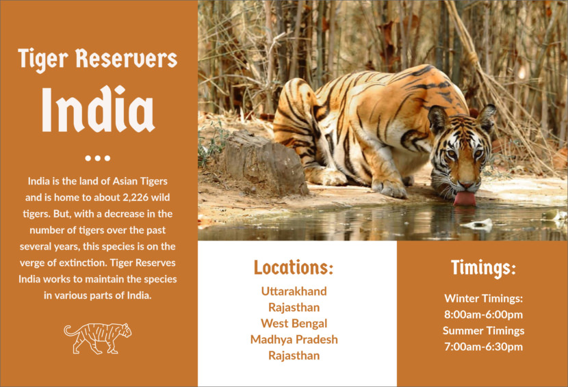 India tiger travel adventure Free Editable Professional Brochure Templates